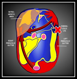 Peritoneal Blood Flow